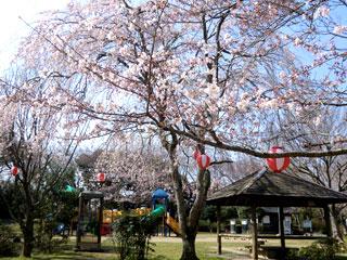 かしま桜まつり